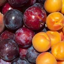 organic fruit of the month club frog hollow farm organic fruit delivery fresh fruit club