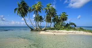 Palm Tree Wallpaper Island Palm Trees 4k Ultra Hd Wallpaper Ololoshenka Pinterest