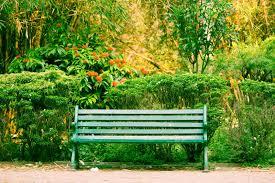 park benches have the best kept secrets raviteja gullapalli