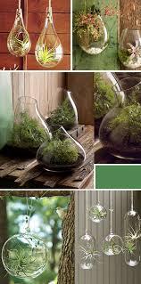 september and sun hanging terrariums an unexpected way to
