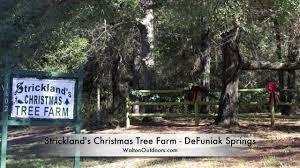 strickland u0027s christmas tree farm defuniak springs youtube