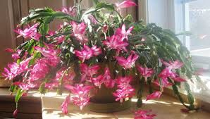beautiful indoor plants plant five easy flowers to grow in small spaces beautiful
