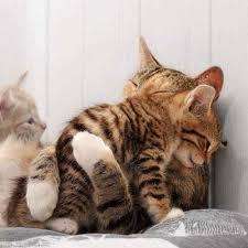 Cat Hug Meme - mom i need a hug lolcats lol cat memes funny cats funny