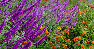 top 10 all weather perennial plants to grow in pots