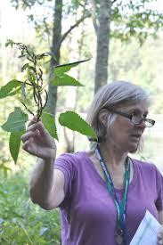va native plant society les 25 meilleures idées de la catégorie question mark butterfly