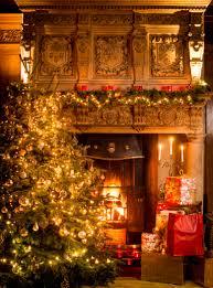 sadie lynes from marldon christmas tree farm near totnes and a
