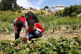 Urban Gardens San Francisco - alemany farm 4 productive acres in s f sfgate