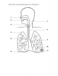 respiratory system anatomy quiz with interest of respiratory