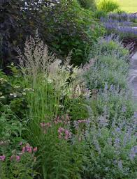 1247 best ornamental grasses images on ornamental