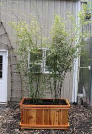 Buy A Planter Bamboo Planters