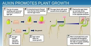 What Is Growth Movement Of A Plant Toward Light Called 5 Plant Growth And Development