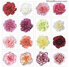 wholesale carnations s day carnations carnations for s day