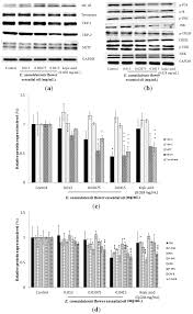 ijms free full text investigation of the anti melanogenic and