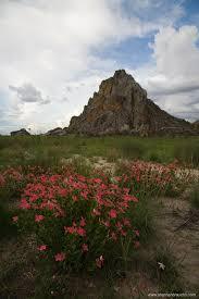 southern madagascar iii isalo national park stephan brauchli
