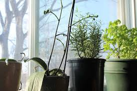 5 gardening tips for indoor herbs earth food and fire