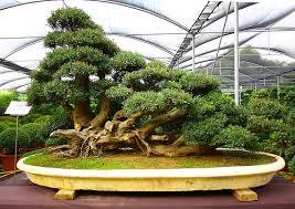 mini bonsai garden beautiful scenery photography indoor tree