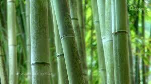 Green Shades by Fifty Shades Of Green Zen Garden Relaxation U0026 Meditation
