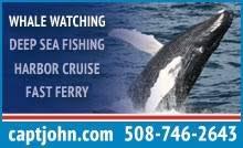 Whale Watches Cape Cod - whale watches activities in cape cod martha u0027s vineyard u0026 nantucket