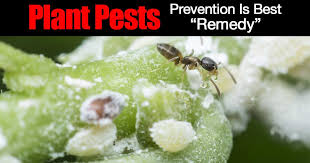 houseplant pests why prevention is the