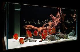 freshwater fish tank ideas aquarium design group custom aquarium