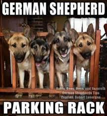 Funny German Shepherd Memes - 16 funny german shepherd memes that will crack you up german