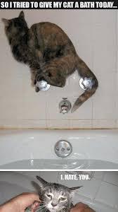 Cute Cat Memes - joke4fun memes cute cat