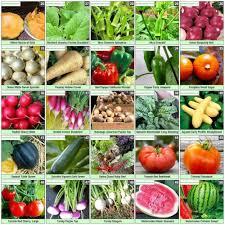 1 heirloom 100 organic vegetable garden survival seeds 50