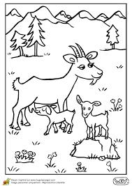 dessin à colorier d u0027une maman chèvre et de ses petits chevreaux