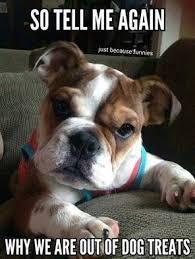 Monday Funny Meme - dog meme monday funny dog memes dog treat meme dog blog