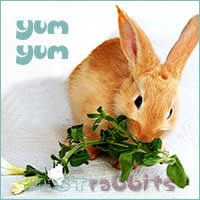 rabbit food rabbits diet what can rabbits eat