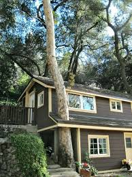 treehouse homes for sale tree houses for sale a tall sycamore tree grows through a part of
