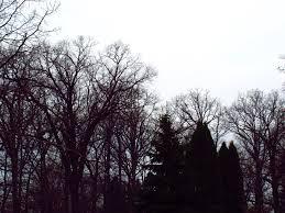 black trees white sky by xxsakura himexx on deviantart