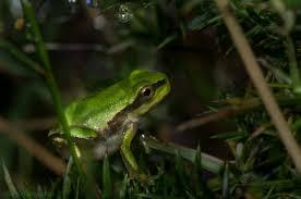 free images nature flower wildlife green amphibian yellow