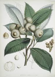 131 best flora arboretum trees images on botanical