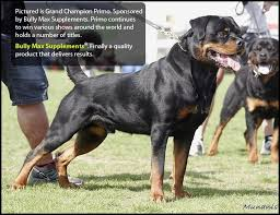 rottweiler dog breeders and champion stud dogs