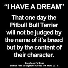 american pitbull terrier types dogs for the love of pitbulls