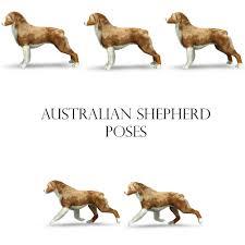 sims 3 australian shepherd template bellfield u0027s creations sims federation cynologique internationale