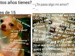 Memes De Chihuahua - los memes del perrito chihuahua más vistos del 2015 te alegrarán el