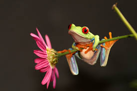 clean and sticky frog earth rangers wire