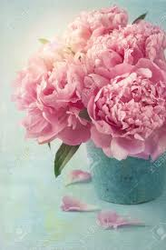 Peony Flowers by Peony Flowers In A Vase Stock Photo Picture And Royalty Free