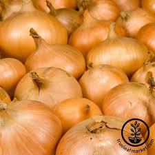 onion seeds vegetable garden seeds