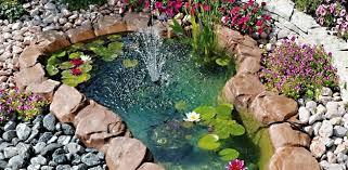 cura giardino la cura laghetto in estate 4 cose da fare agribrianza