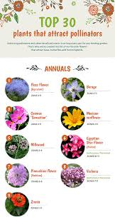 list of native plants top 30 plants that attract pollinators