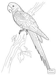 birds parrot and butterfly parrots coloring pages abcfunkids me