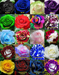 Multicolor Roses Search On Aliexpress Com By Image