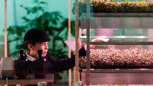 ikea innovative indoor farm grows greens 3 times faster as a garden