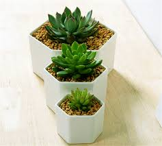 small potted plants great idea for small plantssimple hexagon ceramic flower pot small