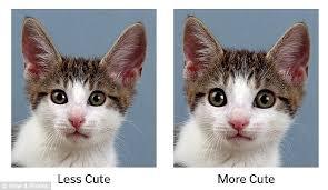 baby schema u0027 effect kittens puppies cute adorable