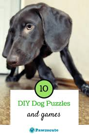 Diy Dog And Cat Treats by 10 Best Diy Dog Puzzle Toys And Games To Make At Home