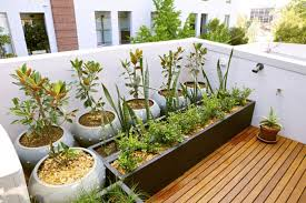 potted plants and the necessary spring care u2013 fresh design pedia